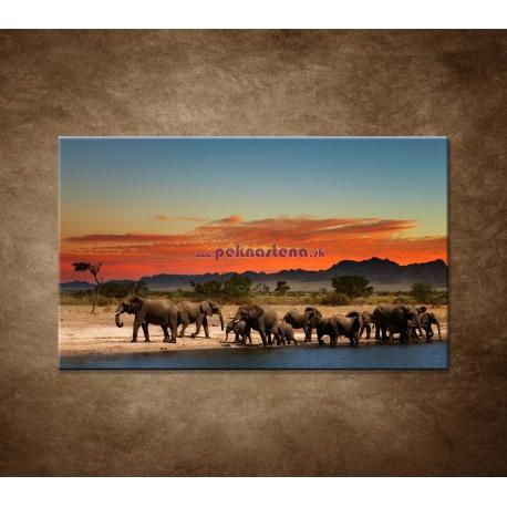 Obrazy na stenu - Safari