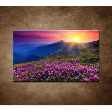 Obrazy na stenu - Západ slnka