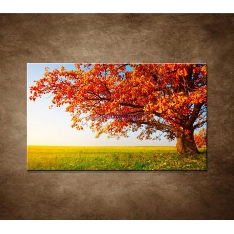 Obrazy na stenu - Jesenný dub