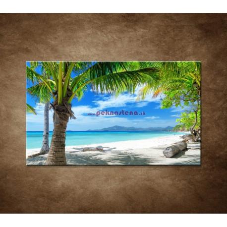 Obrazy na stenu - Pláž s palmou