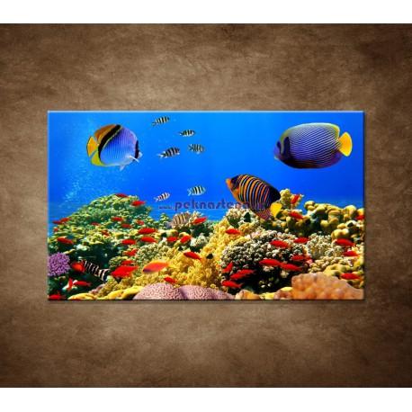 Obrazy na stenu - Podmorský svet