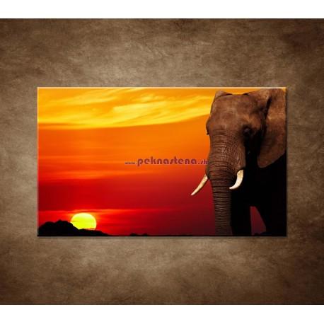 Obrazy na stenu - Afrika