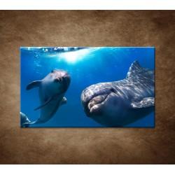 Obraz - Delfíni pod vodou