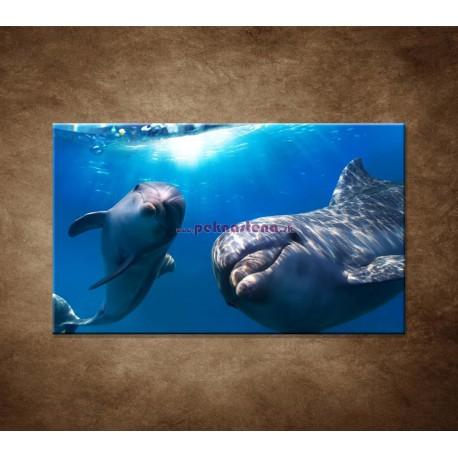 Obrazy na stenu - Delfíni pod vodou