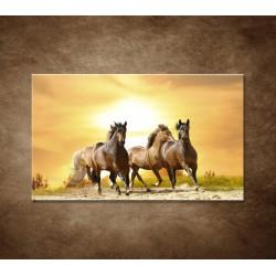 Obraz - Divoké kone