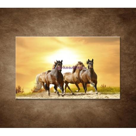 Obrazy na stenu - Divoké kone