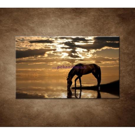Obrazy na stenu - Kôň pri jazere