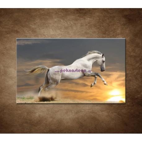 Obrazy na stenu - Kôň pri západe slnka