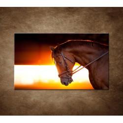 Obraz - Kôň v stajni