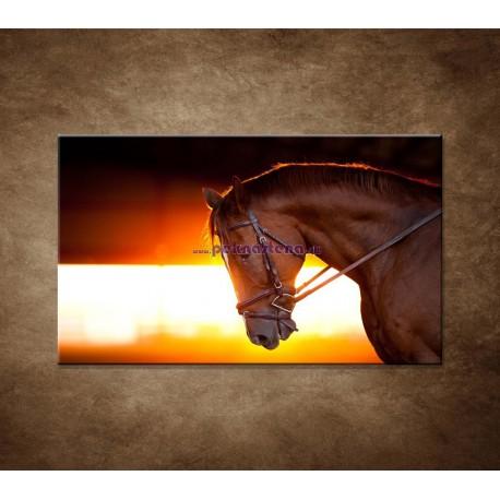 Obrazy na stenu - Kôň v stajni