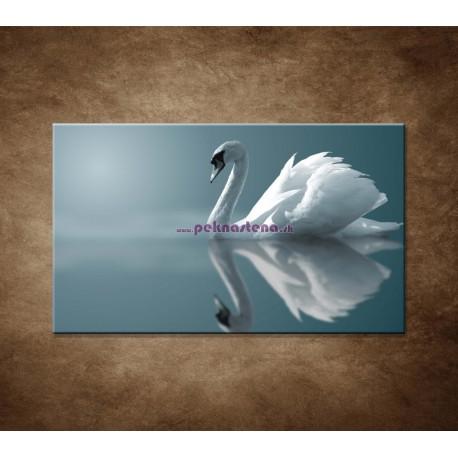 Obrazy na stenu - Labuď