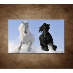 Párik koní