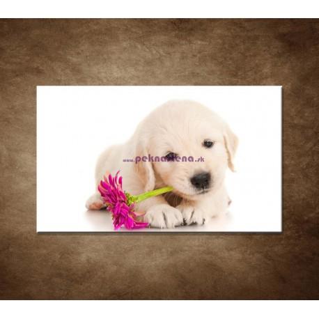 Obrazy na stenu - Psík s kvetom
