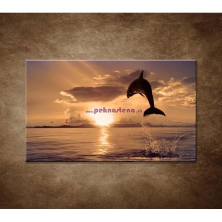 Obrazy na stenu - Skákajúci delfín