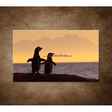 Obrazy na stenu - Tučniaky