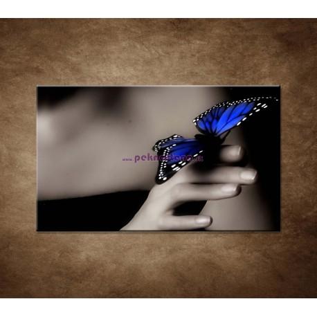 Obrazy na stenu - Modrý motýľ