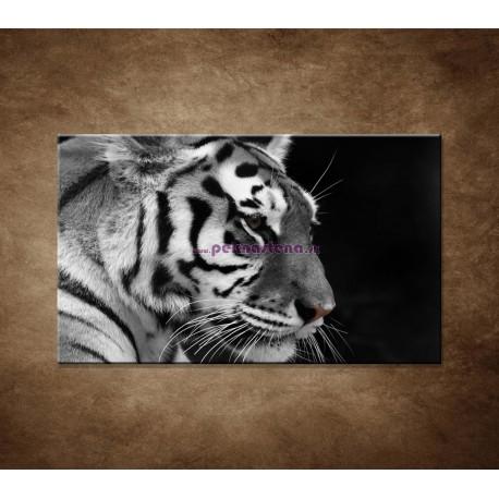 Obrazy na stenu - Tiger - detail