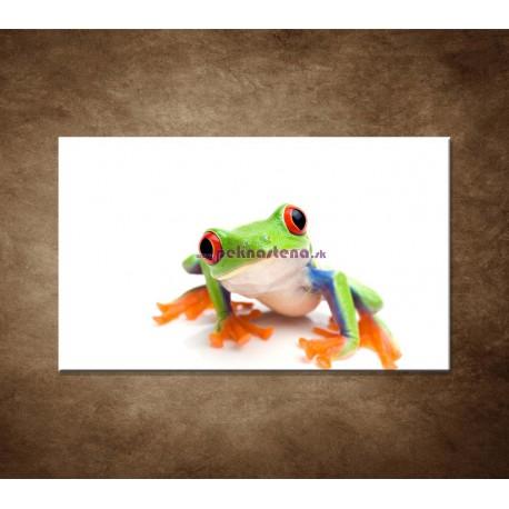 Obrazy na stenu - Žabka