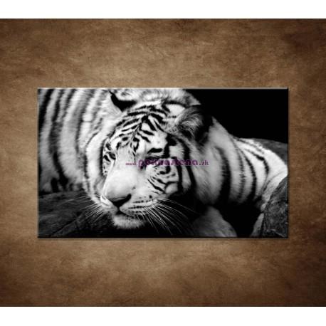 Obrazy na stenu - Sibírsky tiger