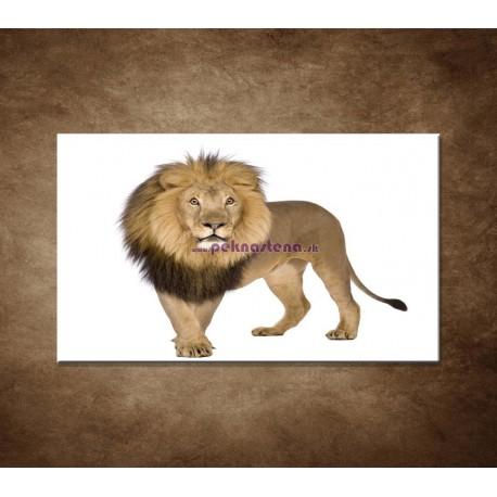 Obrazy na stenu - Lev