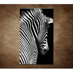 Obrazy na stenu - Zebra