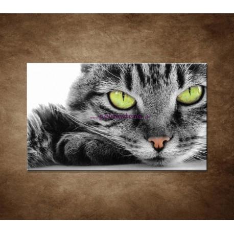 Obrazy na stenu - Mačací pohľad
