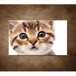 Obraz - Mačiatko