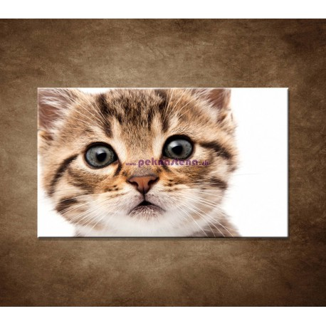 Obrazy na stenu - Mačiatko