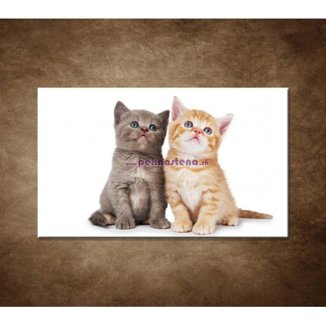 Obrazy na stenu - Dve mačiatká