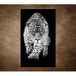 Obraz - Čiernobiely jaguár