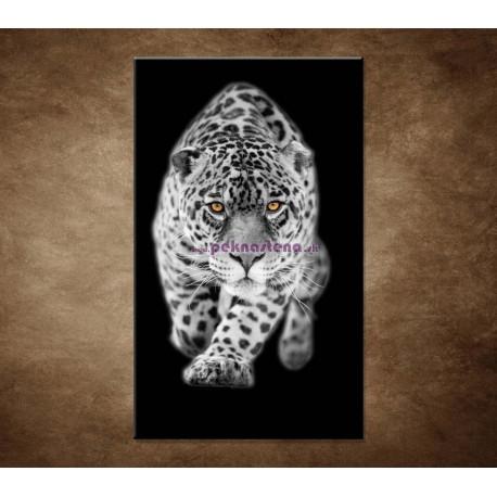 Obrazy na stenu - Čiernobiely jaguár