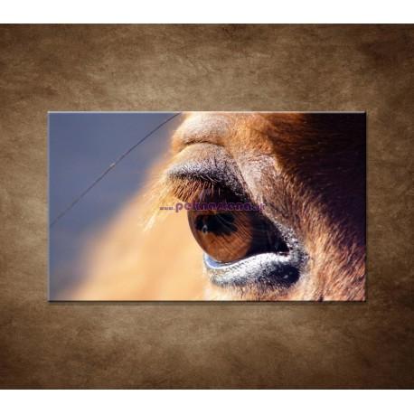Obrazy na stenu - Koňské oko - detail