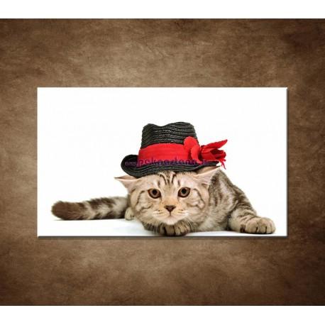 Obrazy na stenu - Mačiatko v čiernom klobúku