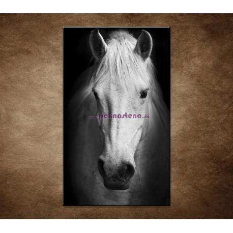Obrazy na stenu - Biely kôň