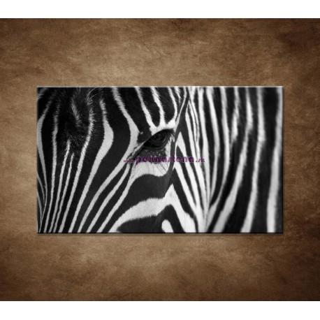 Obrazy na stenu - Zebra - oko