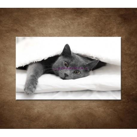 Obrazy na stenu - Odpočívajúca mačka