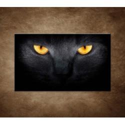 Obraz - Temný pohľad