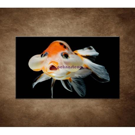Obrazy na stenu - Rybka