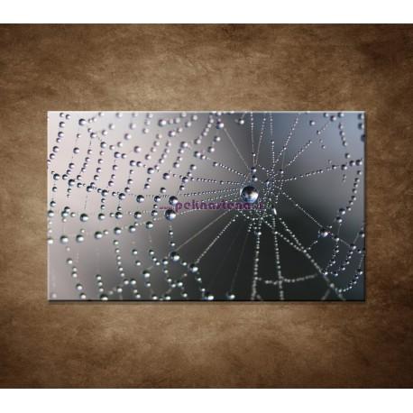 Obrazy na stenu - Makro - Pavučina