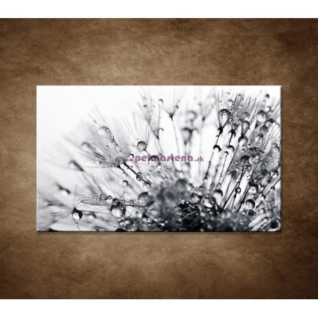 Obrazy na stenu - Makro - Rosa na púpave