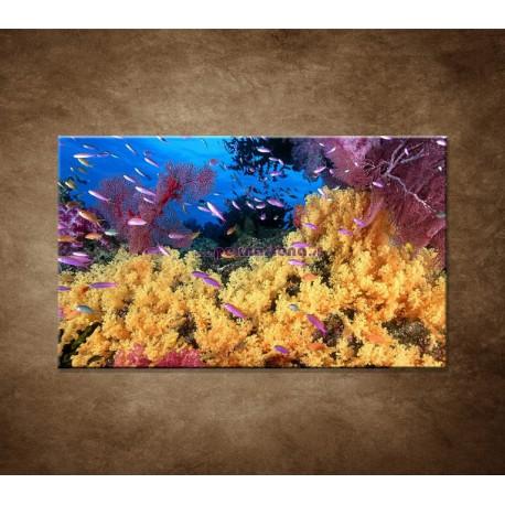 Obrazy na stenu - Korálový útes