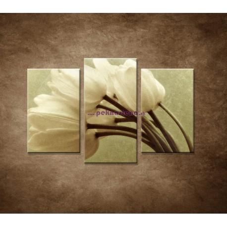 Obrazy na stenu - Kytica tulipánov - 3dielny 75x50cm