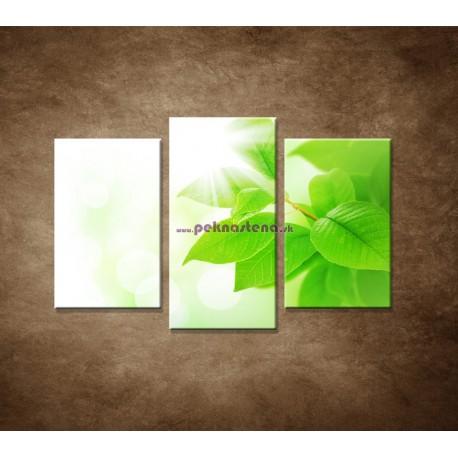 Obrazy na stenu - Jarné lístky - 3dielny 75x50cm