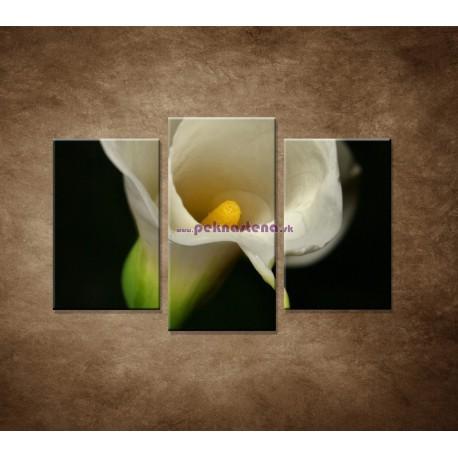 Obrazy na stenu - Kala - 3dielny 75x50cm