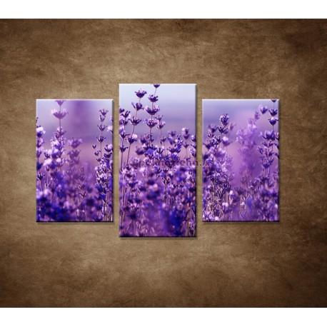 Obrazy na stenu - Levanduľa - 3dielny 75x50cm