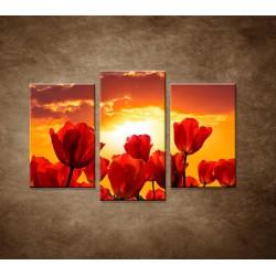 Obrazy na stenu - Západ slnka nad tulipánmi - 3dielny 75x50cm