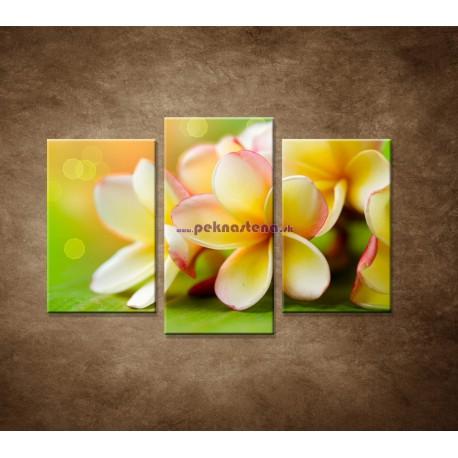 Obrazy na stenu - Žltá orchidea - 3dielny 75x50cm
