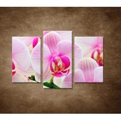 Ružová orchidea - 3dielny 75x50cm