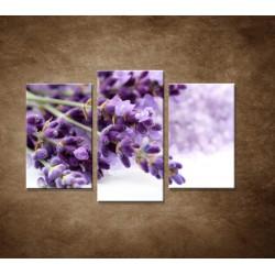 Obrazy na stenu - Kvet levandule - 3dielny 75x50cm