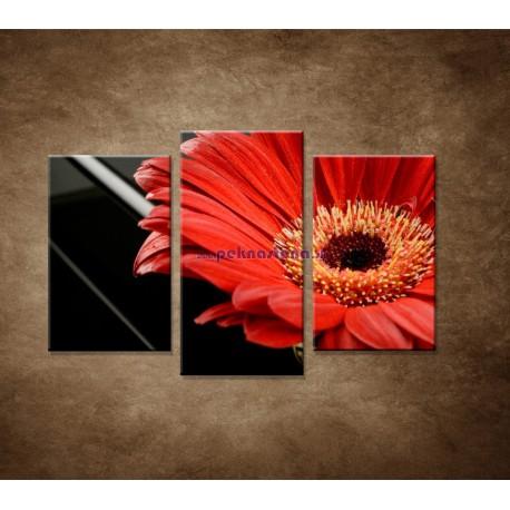 Obrazy na stenu - Gerbera - 3dielny 75x50cm